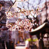超穴場!桜お花見スポット