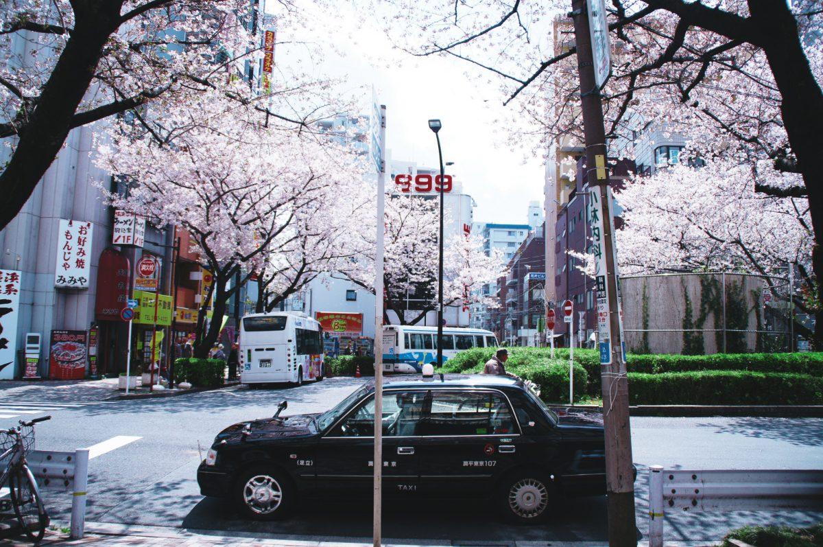 六義園がある駒込駅の南口にも立派な桜が咲いている。
